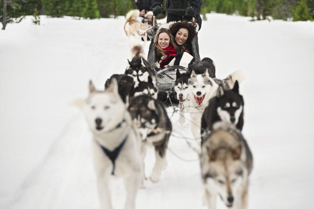 People dog sledding at Marmot Basin
